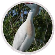 Cattle Egret Pose Round Beach Towel