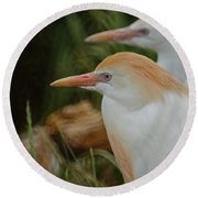 Cattle Egrets Dry Brushed Round Beach Towel