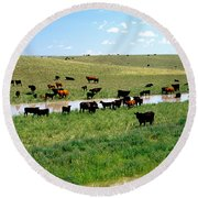 Cattle Graze On Reclaimed Land Round Beach Towel
