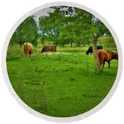 Cattle Grazing In A Lush Pasture Round Beach Towel
