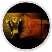 Cattle In Sunny Texas Round Beach Towel