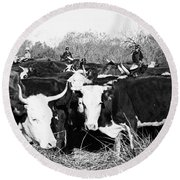 Cattle: Longhorns Round Beach Towel