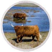 Cattle Scottish Highlanders, Zuid Kennemerland, Netherlands Round Beach Towel