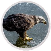 Cautious Eagle Round Beach Towel