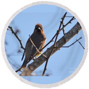 Cedar Wax Wing On The Lookout Round Beach Towel
