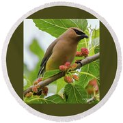 Cedar Waxwing With Mulberries Round Beach Towel