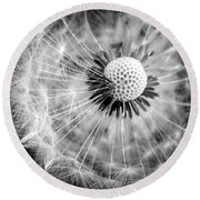 Celebration Of Nature In Black And White Round Beach Towel