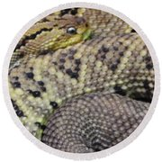 Central American Rattlesnakee Round Beach Towel