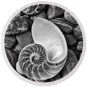 Chambered Nautilus Shell  On River Stones Round Beach Towel