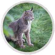 Champion Mama Lynx Round Beach Towel by Tim Newton
