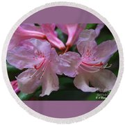 Chapmans Rhododendron Round Beach Towel