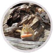Charming Chipmunk Round Beach Towel