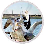 Chatty Seagull Birds Round Beach Towel