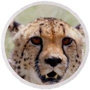 Cheetah No.1 Round Beach Towel