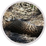 Cheetah Awakened Round Beach Towel