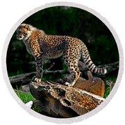 Cheetah Cub Finds Her Pride Rock Round Beach Towel