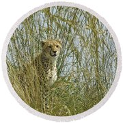 Cheetah Cub In Grass Round Beach Towel