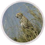 Cheetah Lookout Round Beach Towel