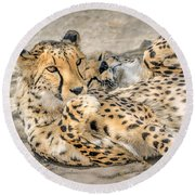Cheetah Lounge Cats Round Beach Towel