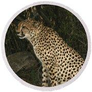 Cheetah Watching Round Beach Towel
