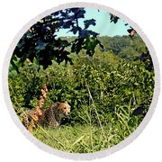 Cheetah Zoo Landscape Round Beach Towel