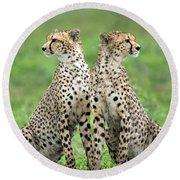 Cheetahs Acinonyx Jubatus In Forest Round Beach Towel