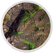 Chelidonura Punctata Nudibranch Round Beach Towel