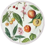 Cherries And Other Fruit-bearing Trees  Round Beach Towel