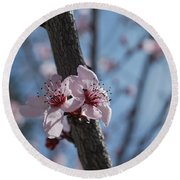 Cherry Blossom Branch Round Beach Towel