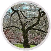 Cherry Blossom Trees Of Branch Brook Park 31 Round Beach Towel