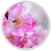 Cherry Blossoms Sweet Pink Round Beach Towel