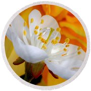 Cherry Flower In The Spring, In Profile Round Beach Towel