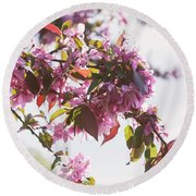Cherry Tree Flowers Round Beach Towel