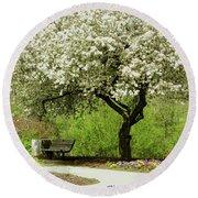 Cherry Tree In Full Bloom Round Beach Towel