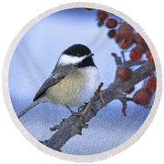 Chickadee With Craquelure Round Beach Towel