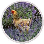 Chicken In The Lavender Round Beach Towel