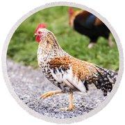 Chickens In Bird In Hand Round Beach Towel