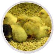 Chicks Round Beach Towel