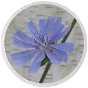 Chicory Round Beach Towel