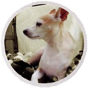 Chihuahua Chiqui Portrait 3 Round Beach Towel