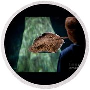 Child Watching Spotted Ray Fish Round Beach Towel