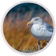 Chilling Seagull Round Beach Towel