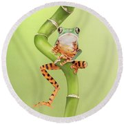 Chilling Tiger Leg Monkey Tree Frog Round Beach Towel