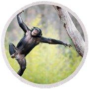 Chimp In Flight Round Beach Towel