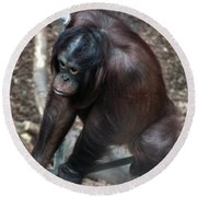 Chimpanzee Round Beach Towel