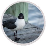 Chincoteague Island - Great Black-headed Gull Round Beach Towel