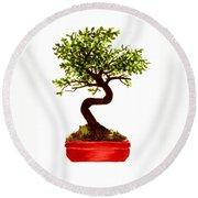 Chinese Elm Bonsai Tree Round Beach Towel