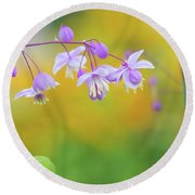 Chinese Meadow Rue Round Beach Towel
