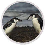 Chinstrap Penguin Duo Round Beach Towel