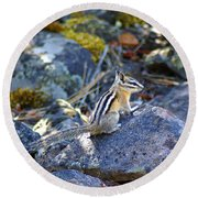 Chipmunk On The Rocks Round Beach Towel